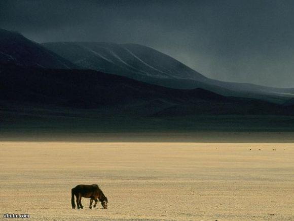 السهوب المنغولية - تتميز المراعي في المنطقة المفتوحة بالمناخ الجاف والتحولات الكبيرة في درجة الحرارة بين الحرارة الشديدة والبرد.