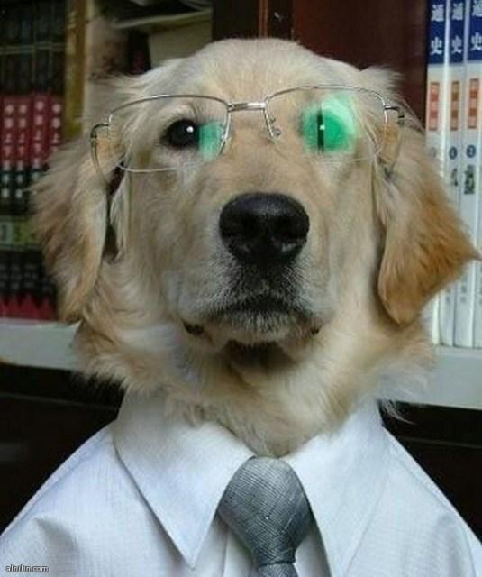 صور الحيوانات البرية-كلب يرتدي نظارة وكرفتة