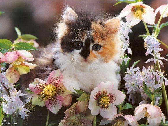 صورة قطة أنيقة - وسط الزهور متصور