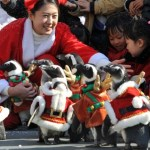 SKOREA-CHRISTMAS-AMUSEMENT-PENGUIN