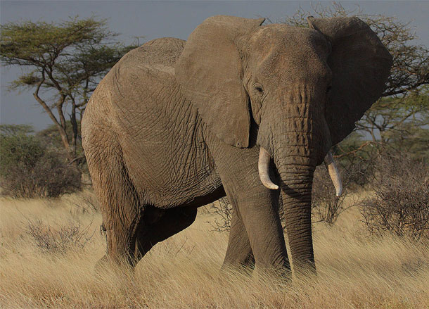 8. elefante - Imgur