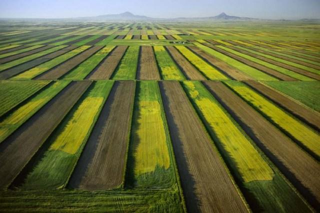 16. Plantação de trigo