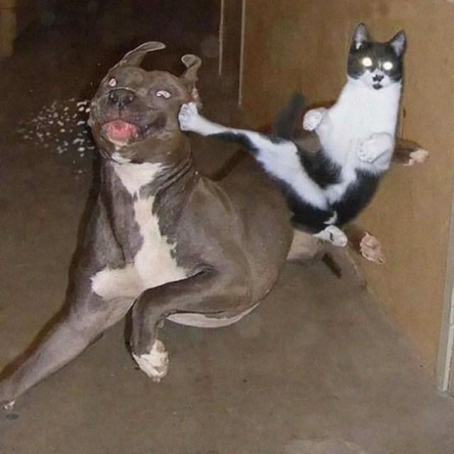 gato10