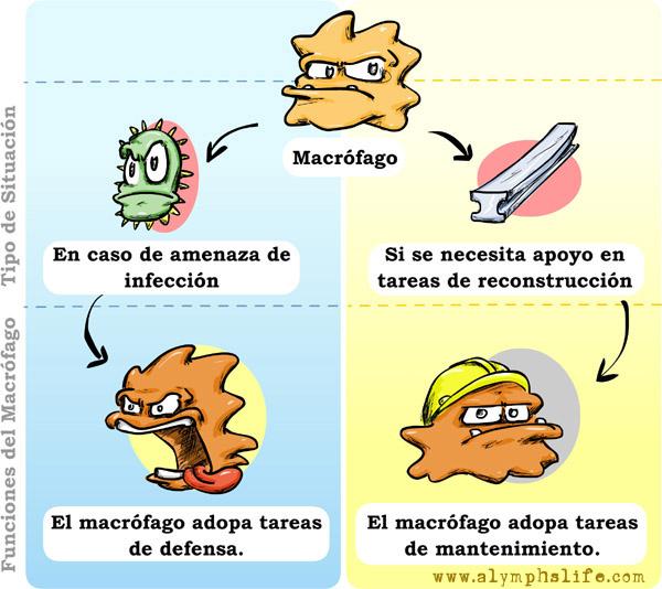 Polarización de monocitos y macrófagos