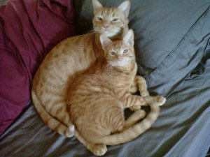 I still miss Hobbes and Cheddar.