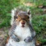 Avoid squirrels