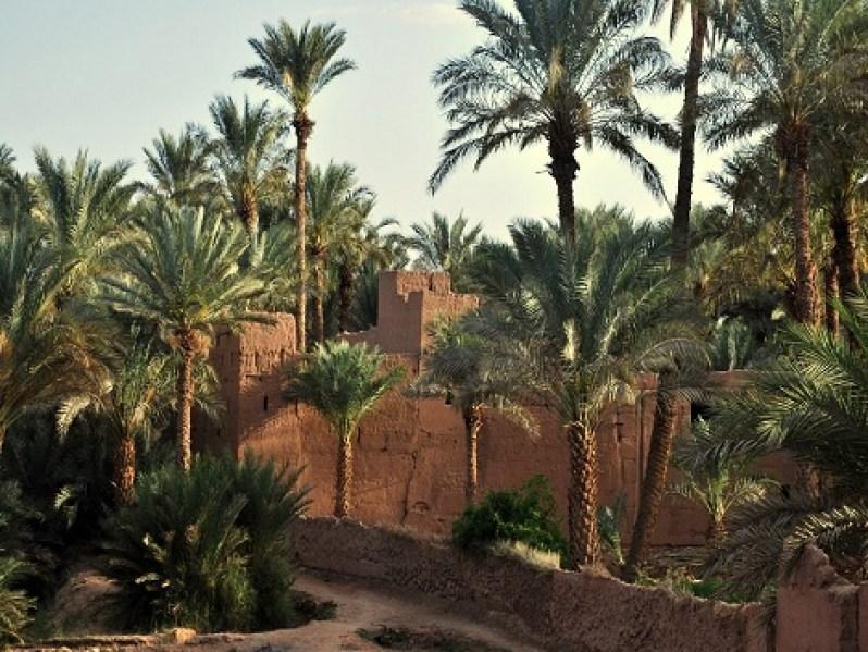 Ancienne kasbah dans la palmeraie de Zagora