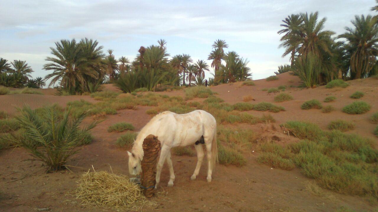 turismo-sostenible-marruecos-viajes-amazigh