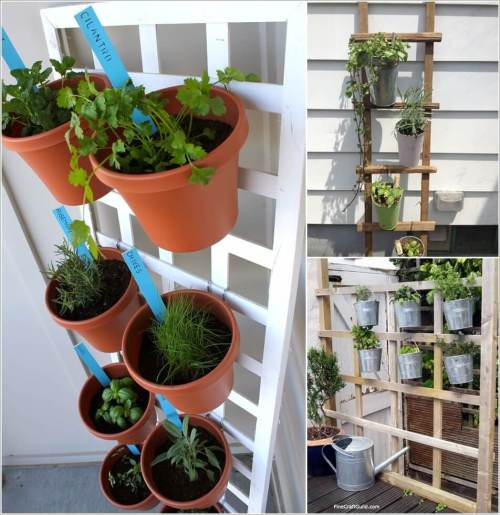 Medium Of Herb Garden Balcony