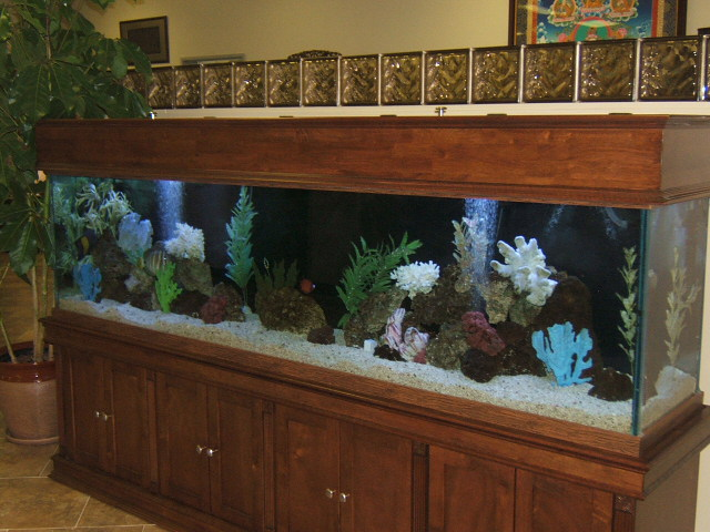Turtle tank 200 gallon turtle introduced to new 200 for 200 gallon fish tank for sale