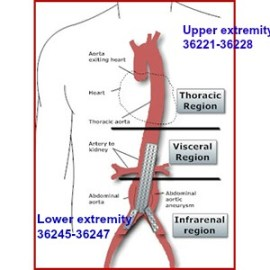 Coding Selective and Non Selective Catheter Placement of Lower Extremity