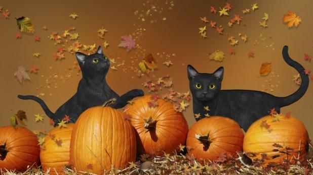 Black cats Pumpkins