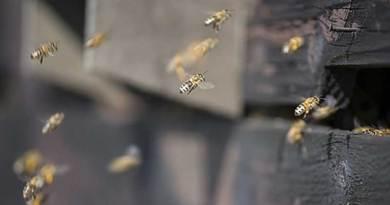 La fratrie Durner : plus vieil apiculteur d'Alsace