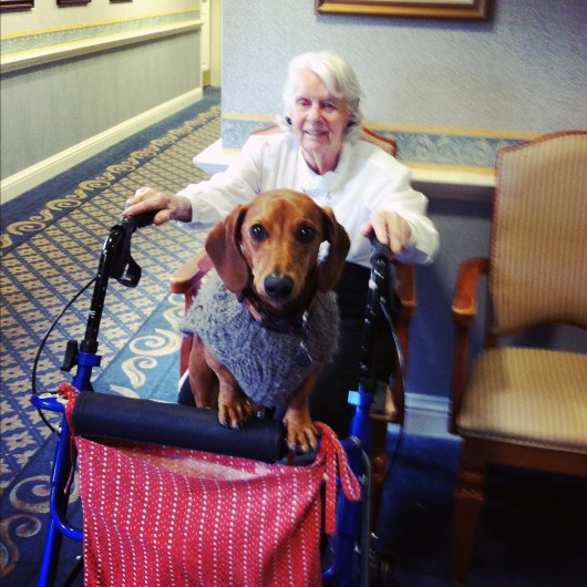 Ammo the Dachshund // Nursing Home Visit