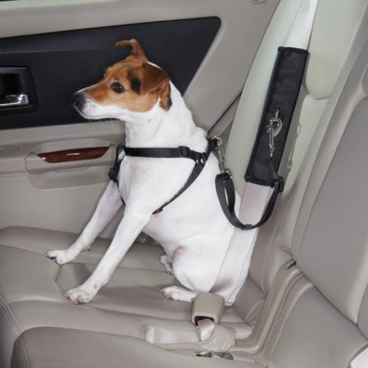 car seatbelt attachment