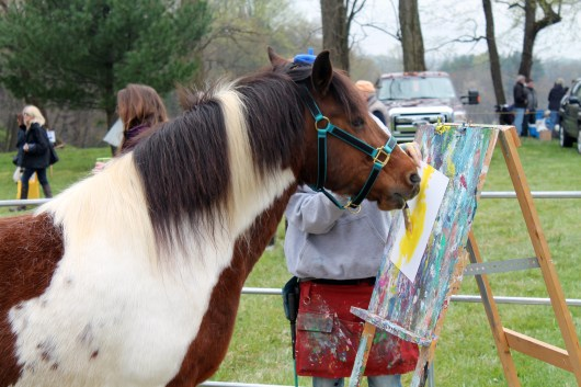 ammo the dachshund and painting pony at point to point races