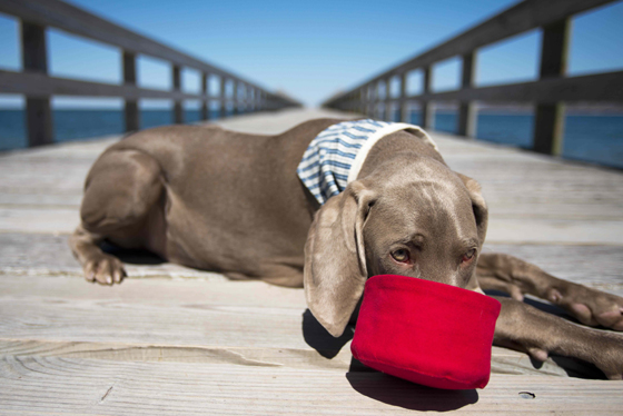 Billy Wolf Giveaway and Sale // Ammo the Dachshund