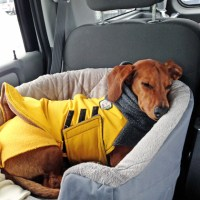 A Car Travel Bed to Keep your Dog Safe