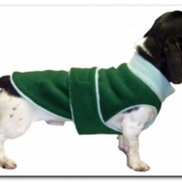 10 Fall Sweaters that Fit Dachshunds