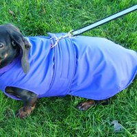 10 Winter Coats that Fit Dachshunds