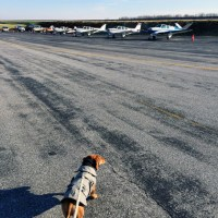 Dachshund Attempts to Fly Plane