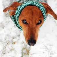 Snug-A-Bull Snood Review & Giveaway