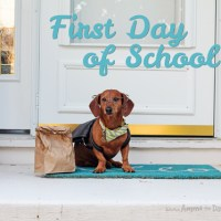 A Dog's First Day of School