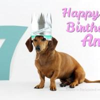 Birthday Week: Ammo Turns 7!