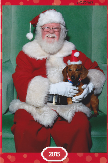 Dog Days of Cheer! Ammo the Dachshund Visits Santa