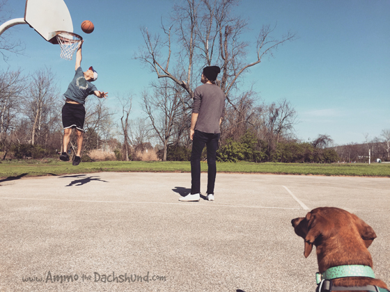 Basketball and Snowballs - Ammo the Dachshund hangs with Cruisr the Band