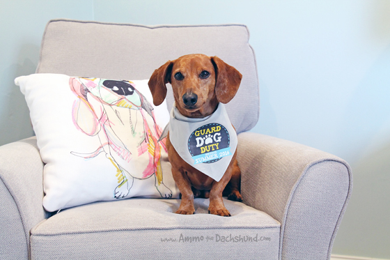 The Big Secret Ammo the Dachshund's Been Hiding