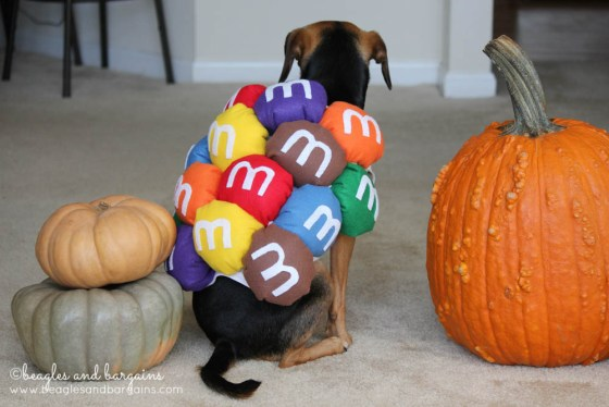 10 Awesome DIY Dog Halloween Costumes
