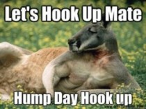 hump day hook up