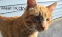 Ducky, the loud, yowling feline bottomless pit