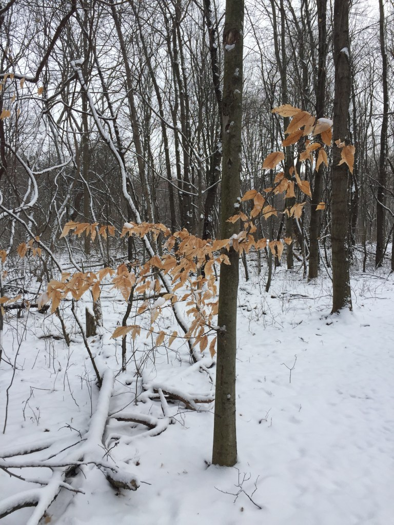The colors of the leaves still clinging to the trees. There is color even in the bleakness of winter.