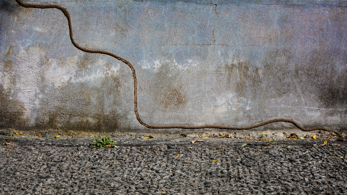Photographic image of a shelter tube created by termites. This tube runs across and down a textured concrete wall.