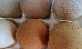 farm_fresh_eggs
