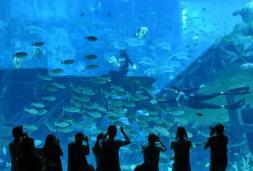 Como parte de la celebración mundial del Día de los Océanos, el S.E.A. Aquarium lanzará actividades temáticas de conservación de los océanos durante 10 días / Foto: AFP