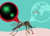 Identifican cómo el zika afecta a las células del cerebro en desarrollo