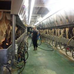 """El tema fue """"mejoramiento de la genética vacuna"""", especialmente dirigido al ganado lechero/ Foto: Prensa Embajada de EEUU en Venezuela"""