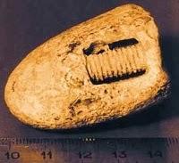 tornillo-fosilizado