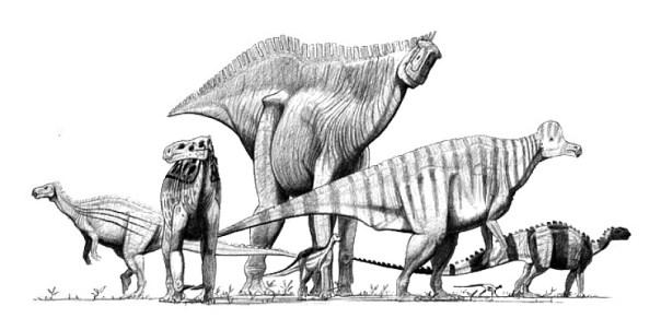 Según algunos científicos, el hecho de que cerca del 96% de todo nuestro genoma sea a primera vista inútil se debe a que esta porción genómica es la que nos emparenta con todas las demás especies del planeta, incluyendo hongos, bacterias y los extintos dinosaurios. En la imagen, impresión artística de seis ornitópodos y un heterodontosáurido. (Public Domain)