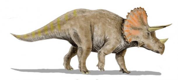 Classica Ricostruzione Triceratops di Nazioni Unite
