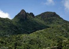 Плотные тропические заросли леса El Yunque.