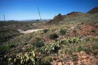 Пустыня еще не перешла в песчаную стадию. Поверхность земли покрывает мелкая щебенка и гравий.