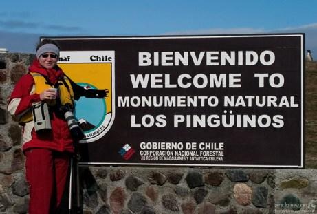 Добро пожаловать в пингвинье царство! Остров Магдалены.