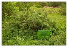 Температура воздуха в ботаническом саду в летнее время на 1,5-2° выше, чем на других участках острова.