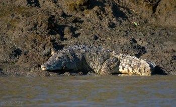 Крокодилий пахан с жутким прикусом. Берег реки Rio de los Crocodiles.