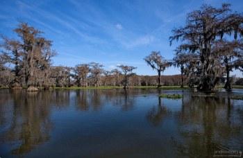 Лысые кипарисы на озере Каддо.