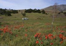 Весенние цветы в парке. Национальный парк Torres del Paine.